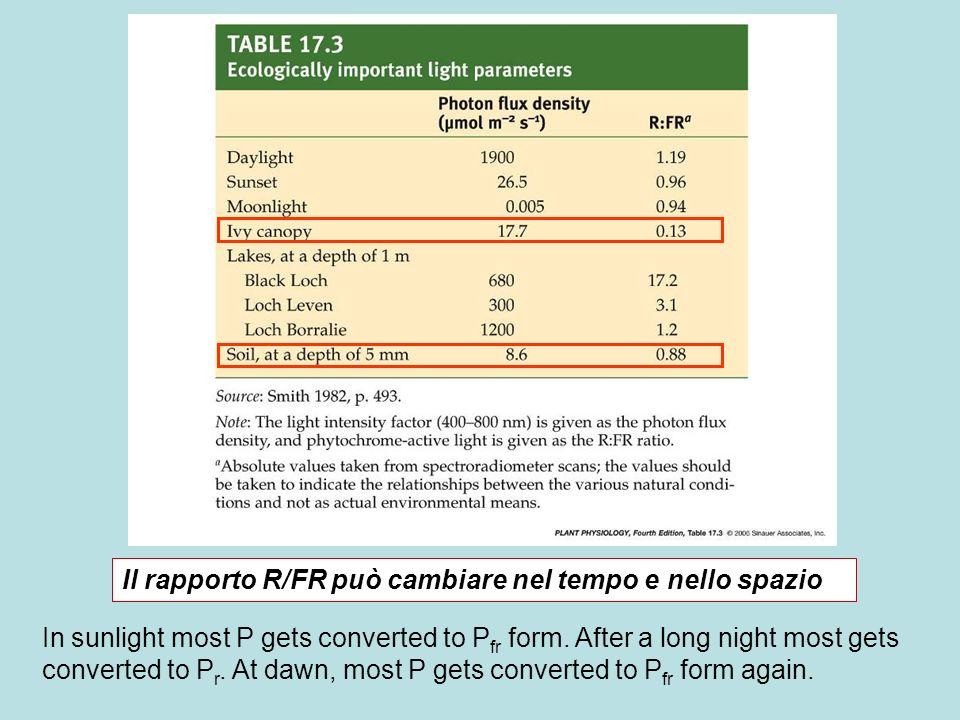 Il rapporto R/FR può cambiare nel tempo e nello spazio