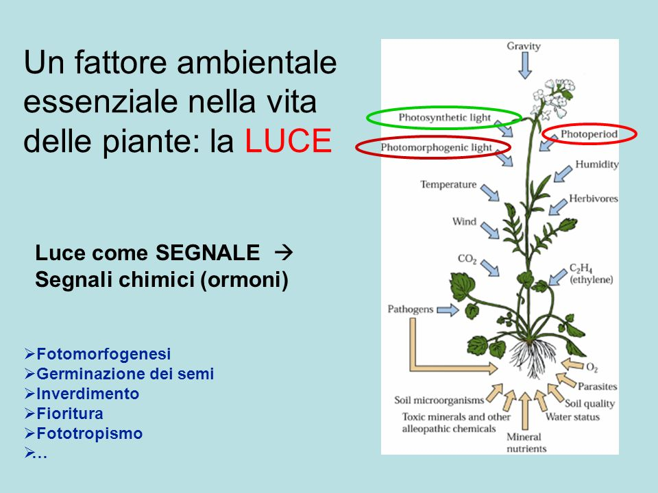 Un fattore ambientale essenziale nella vita delle piante: la LUCE