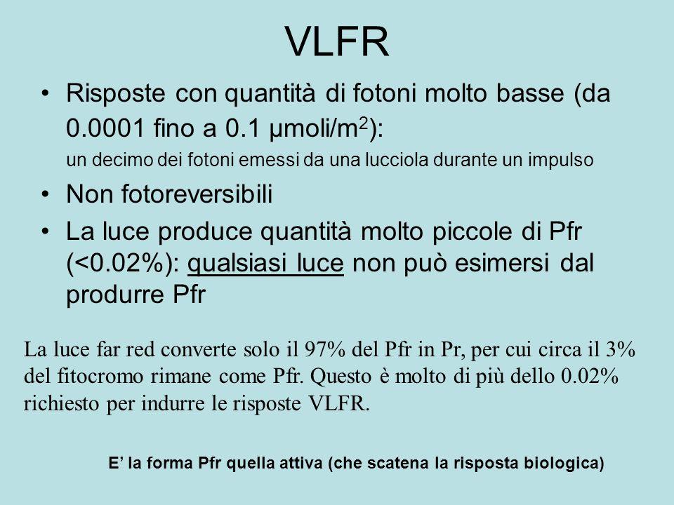 VLFRRisposte con quantità di fotoni molto basse (da 0.0001 fino a 0.1 µmoli/m2): un decimo dei fotoni emessi da una lucciola durante un impulso.
