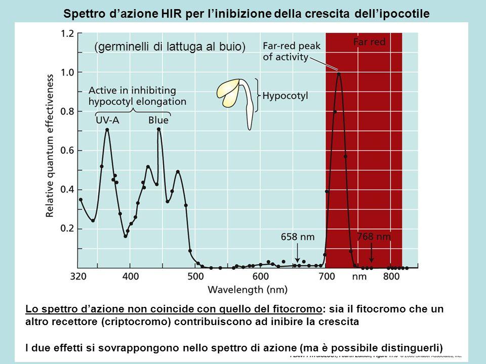 Spettro d'azione HIR per l'inibizione della crescita dell'ipocotile