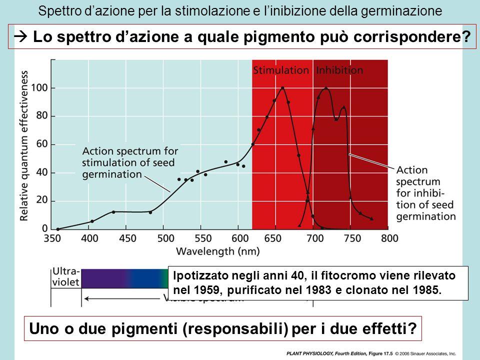 Spettro d'azione per la stimolazione e l'inibizione della germinazione