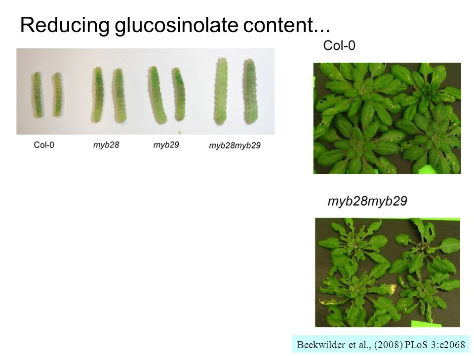 Reducing glucosinolate content...