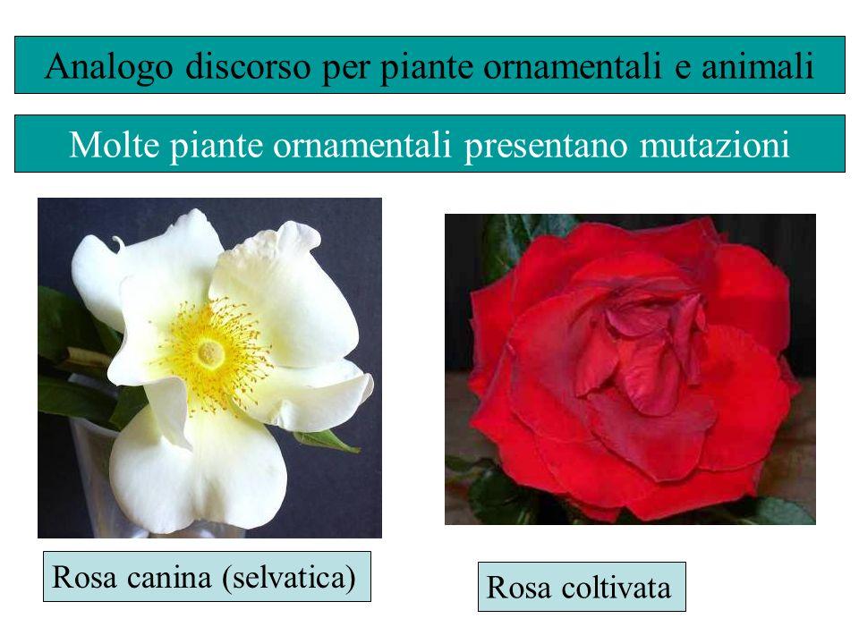 Analogo discorso per piante ornamentali e animali