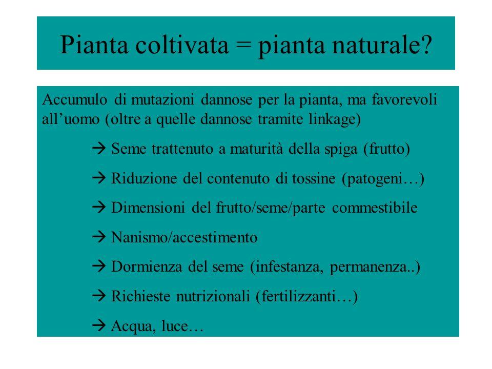 Pianta coltivata = pianta naturale