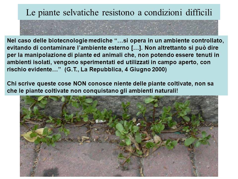 Le piante selvatiche resistono a condizioni difficili