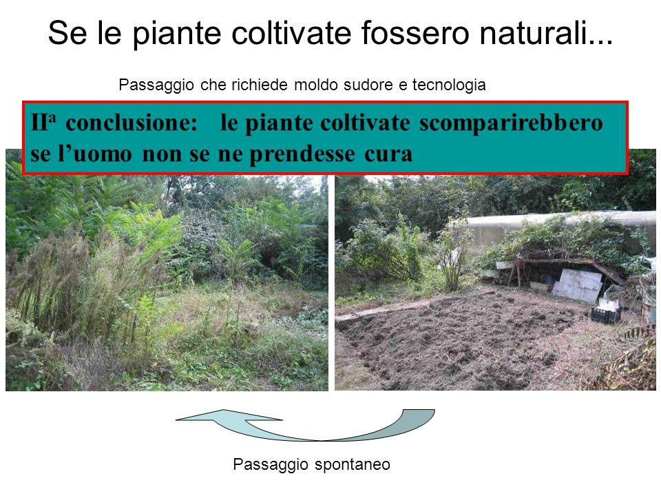 Se le piante coltivate fossero naturali...