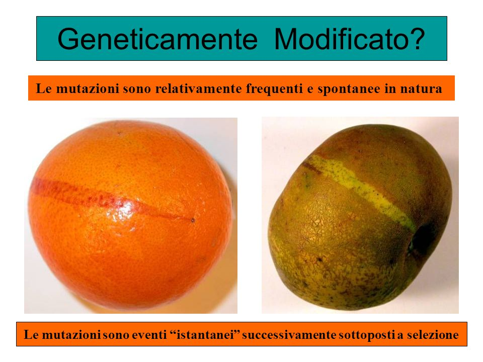 Geneticamente Modificato