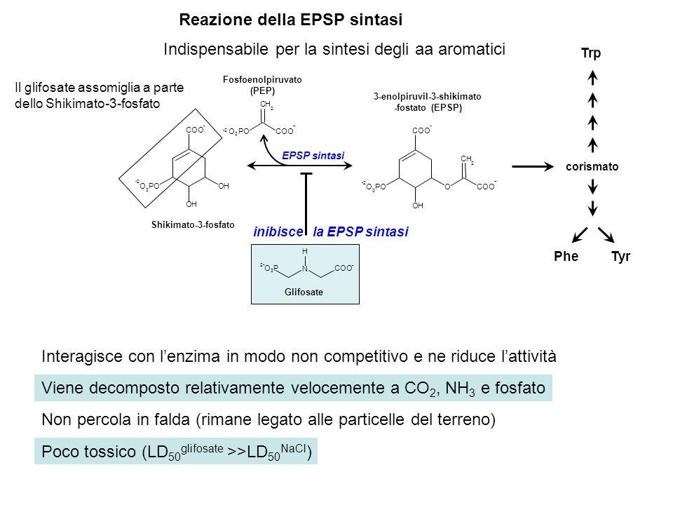 Reazione della EPSP sintasi