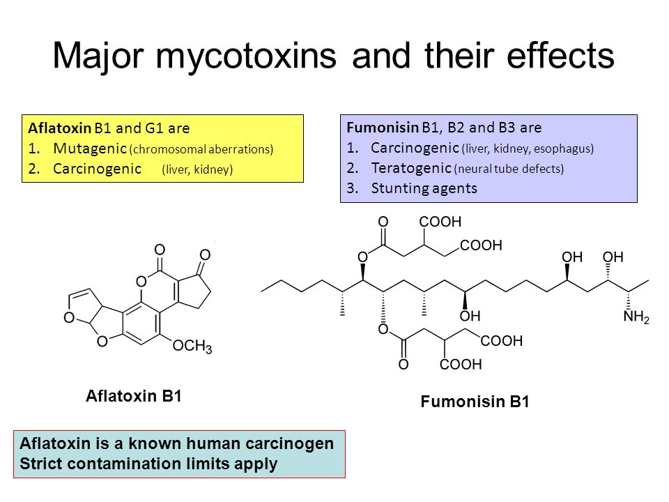 Major mycotoxins and their effects