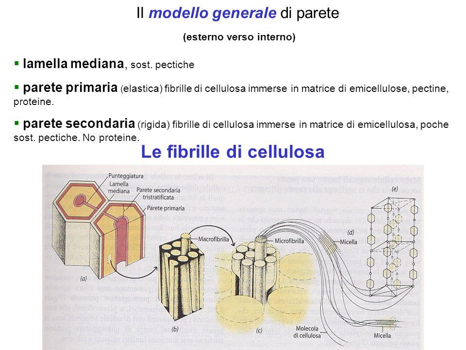 Le fibrille di cellulosa