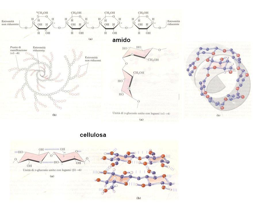 amido cellulosa