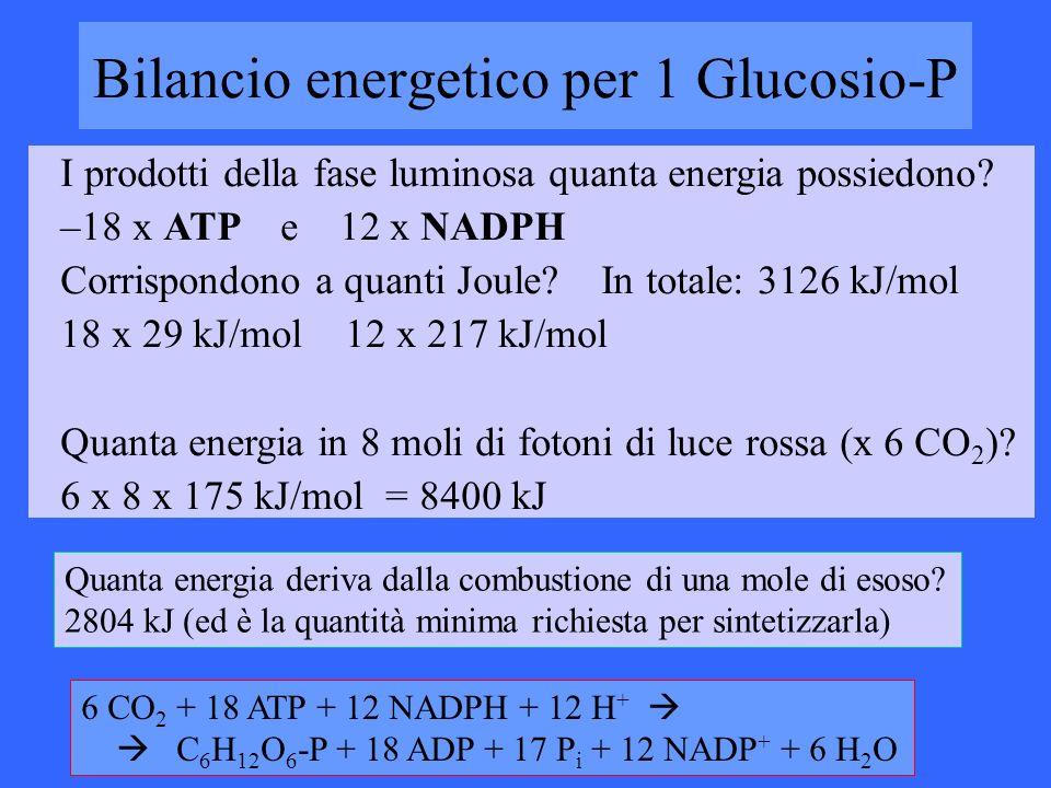 Bilancio energetico per 1 Glucosio-P