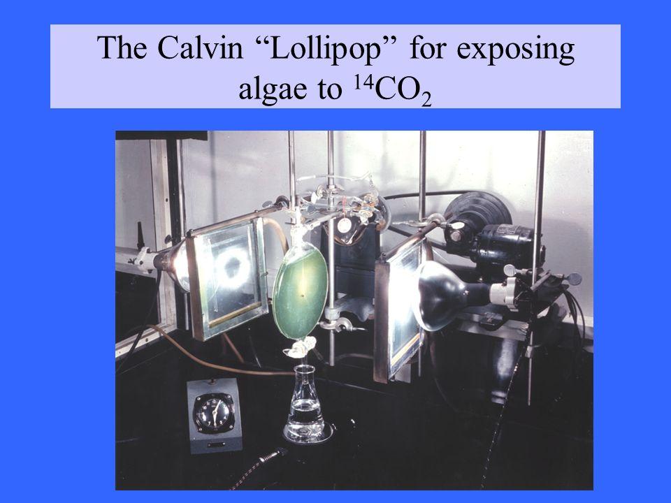 The Calvin Lollipop for exposing algae to 14CO2