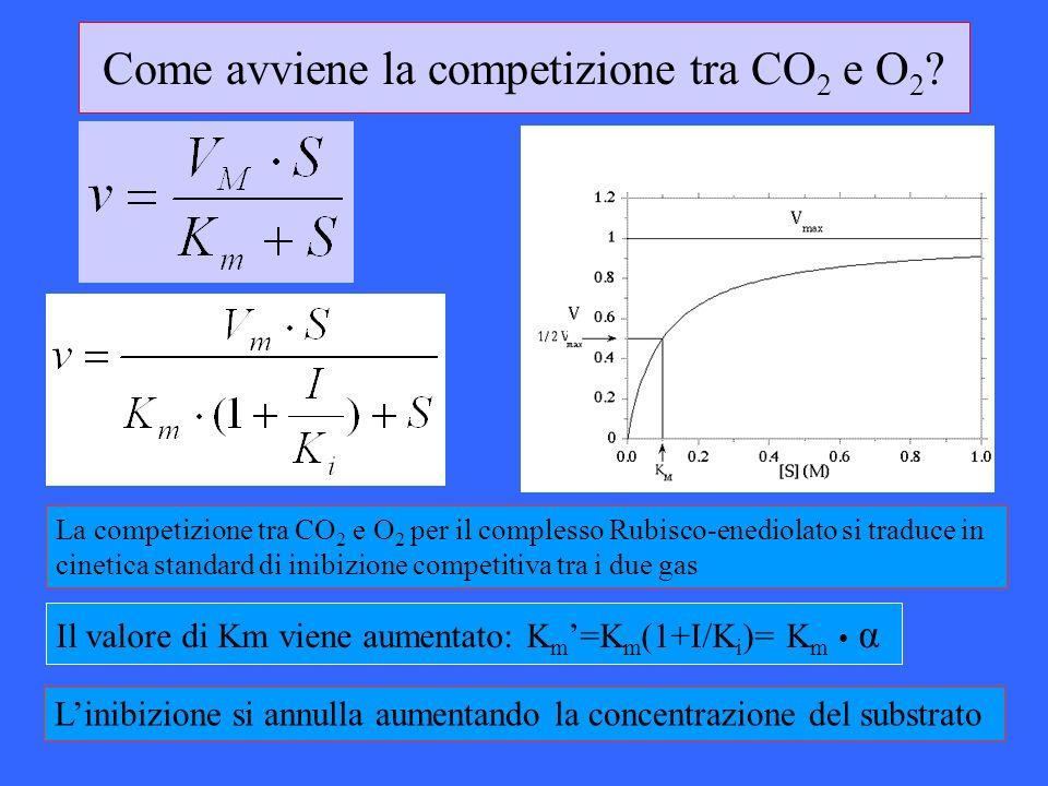 Come avviene la competizione tra CO2 e O2