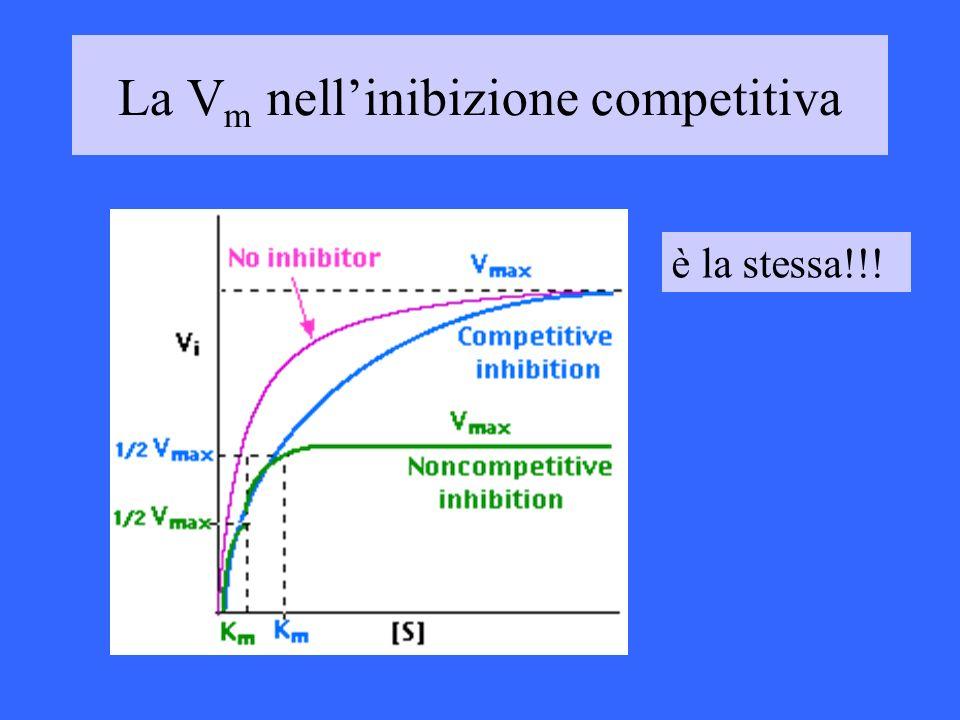 La Vm nell'inibizione competitiva