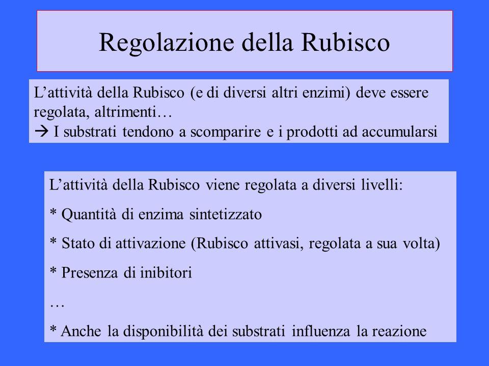 Regolazione della Rubisco