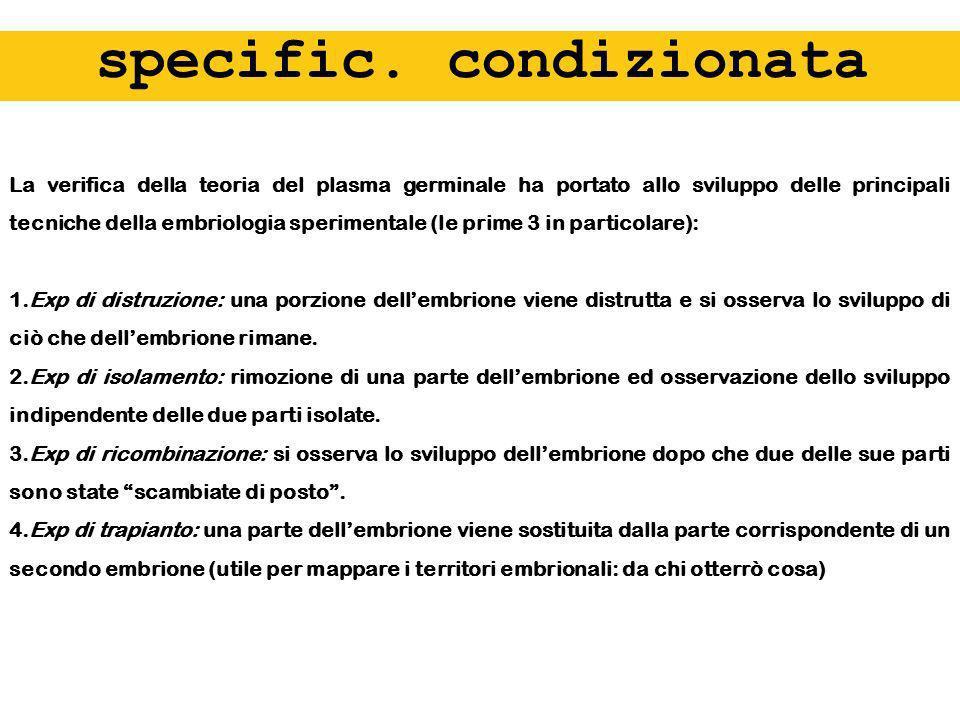 specific. condizionata