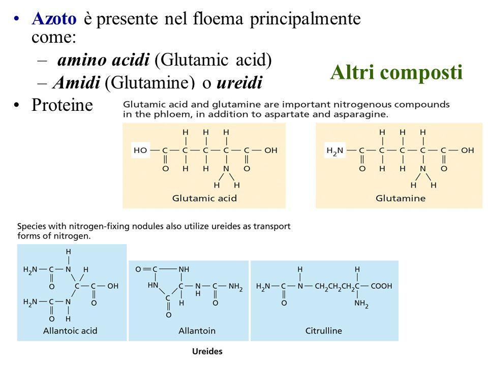 Altri composti Azoto è presente nel floema principalmente come: