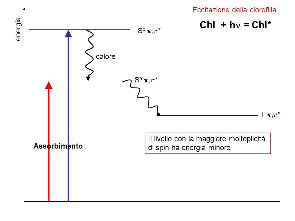 Chl + h = Chl* Eccitazione della clorofilla energia Sb ,* calore