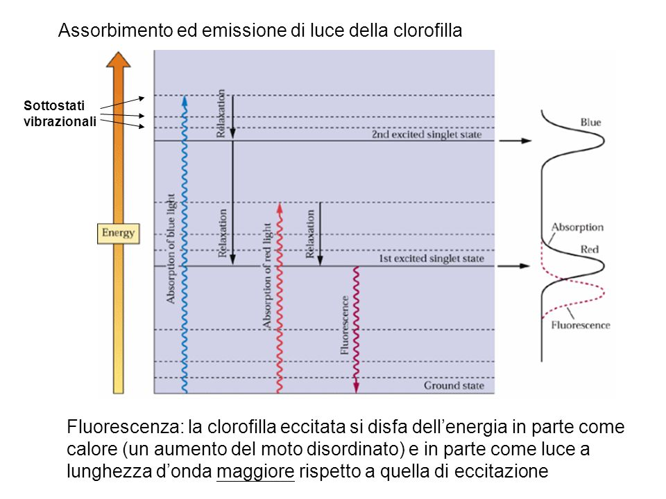 Assorbimento ed emissione di luce della clorofilla