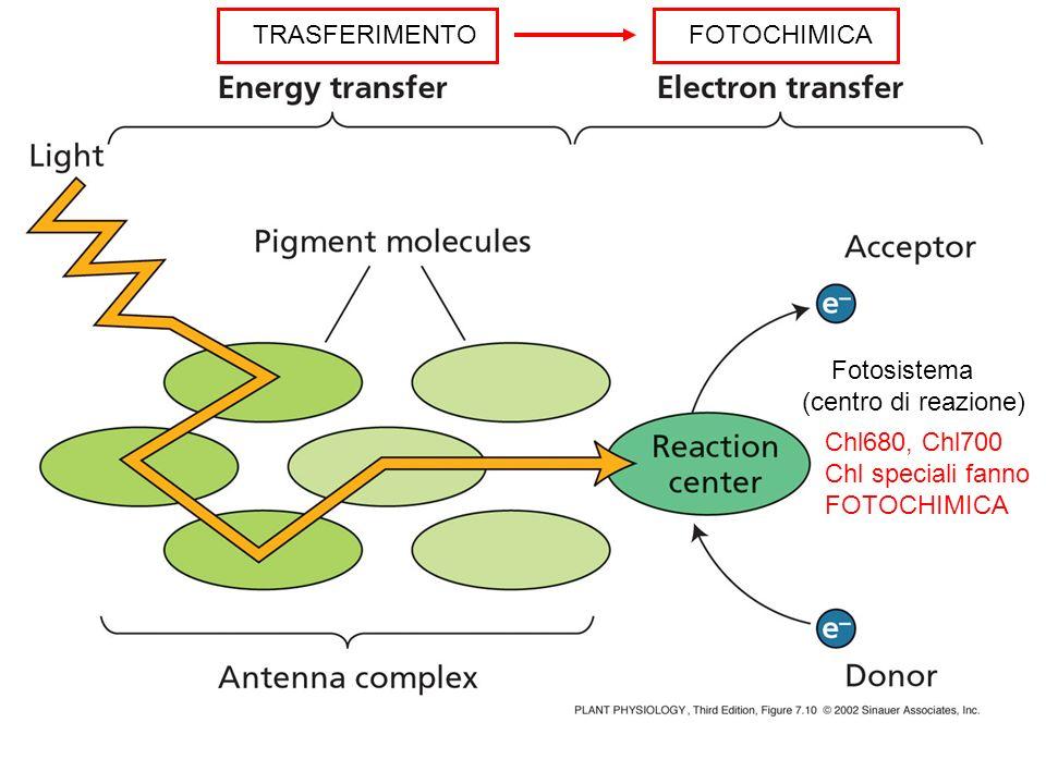 TRASFERIMENTO FOTOCHIMICA. Fotosistema. (centro di reazione) Chl680, Chl700. Chl speciali fanno.