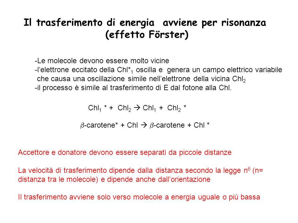 Il trasferimento di energia avviene per risonanza (effetto Förster)