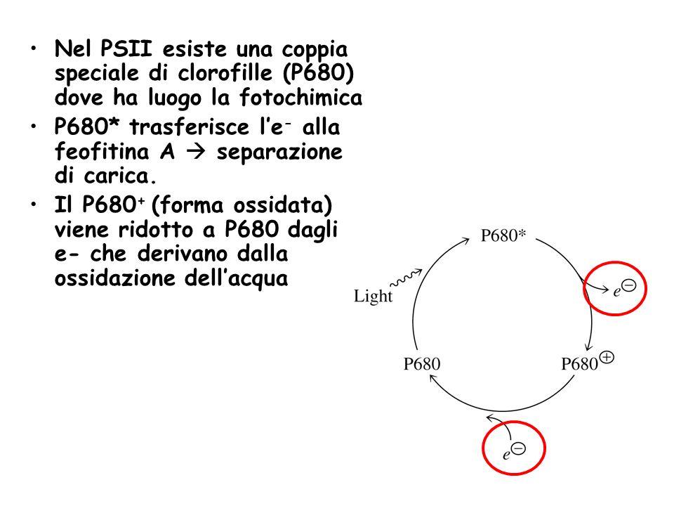 Nel PSII esiste una coppia speciale di clorofille (P680) dove ha luogo la fotochimica