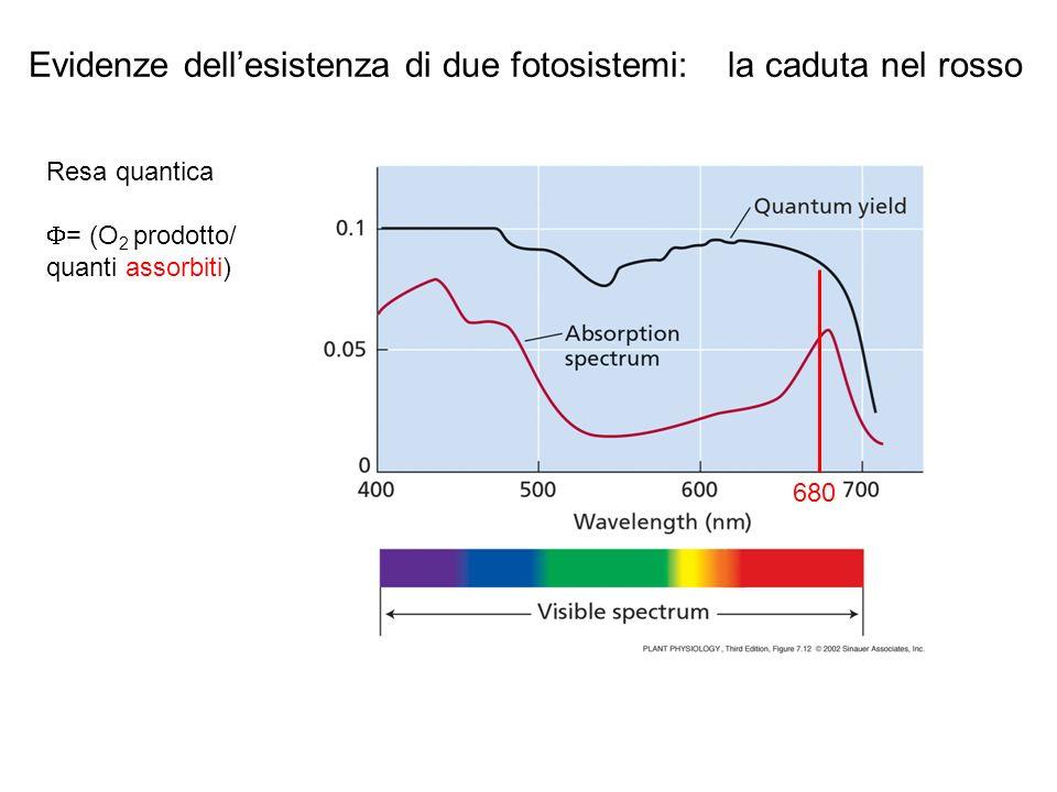 Evidenze dell'esistenza di due fotosistemi: la caduta nel rosso