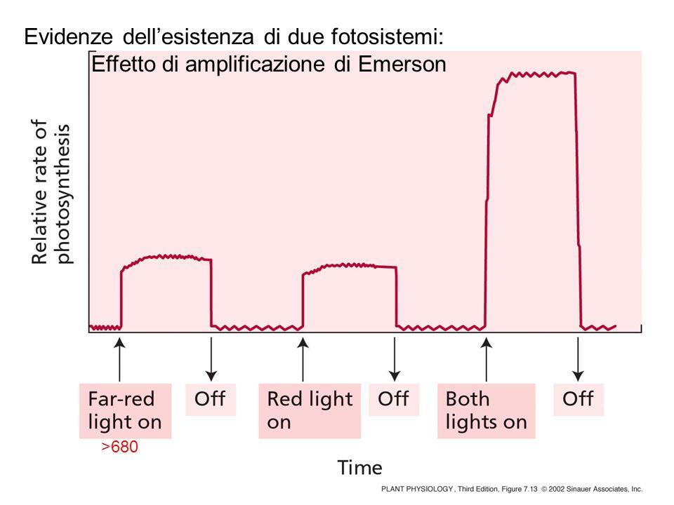 Evidenze dell'esistenza di due fotosistemi: