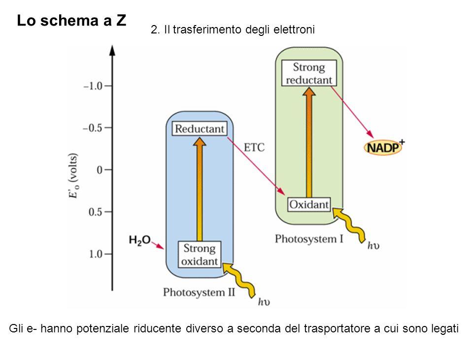 Lo schema a Z 2. Il trasferimento degli elettroni
