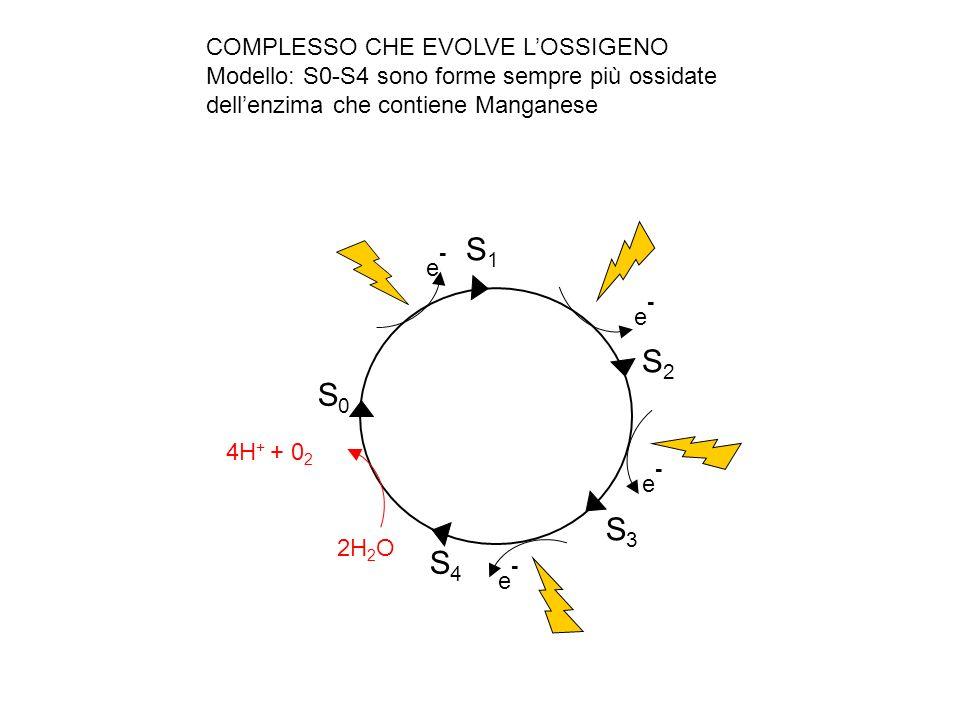 S1 S2 S0 S3 S4 COMPLESSO CHE EVOLVE L'OSSIGENO