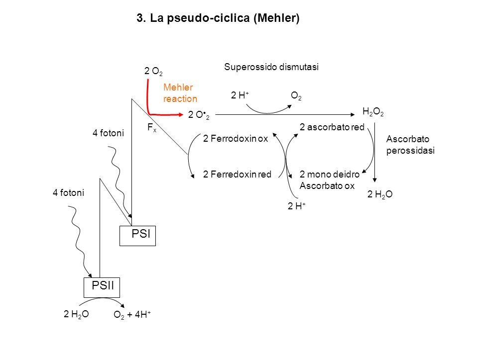 3. La pseudo-ciclica (Mehler)