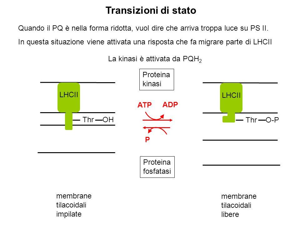 Transizioni di stato Quando il PQ è nella forma ridotta, vuol dire che arriva troppa luce su PS II.