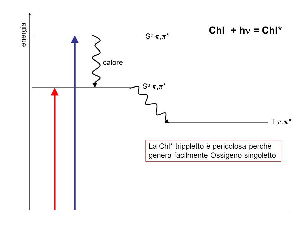 Chl + h = Chl* energia Sb ,* calore Sa ,* T ,*