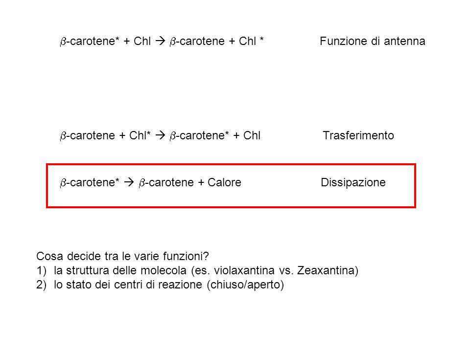 -carotene* + Chl  -carotene + Chl * Funzione di antenna