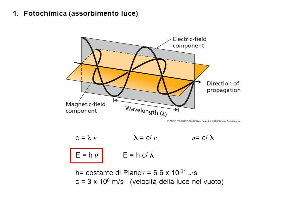 Fotochimica (assorbimento luce)