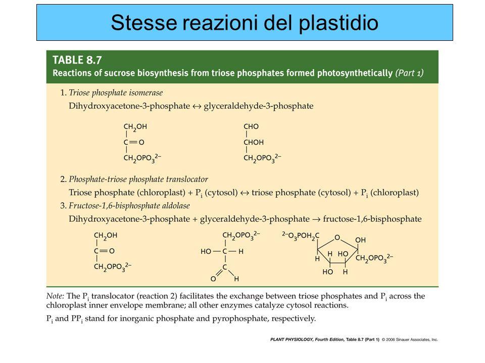 Stesse reazioni del plastidio