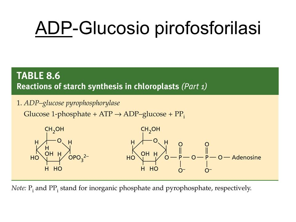 ADP-Glucosio pirofosforilasi