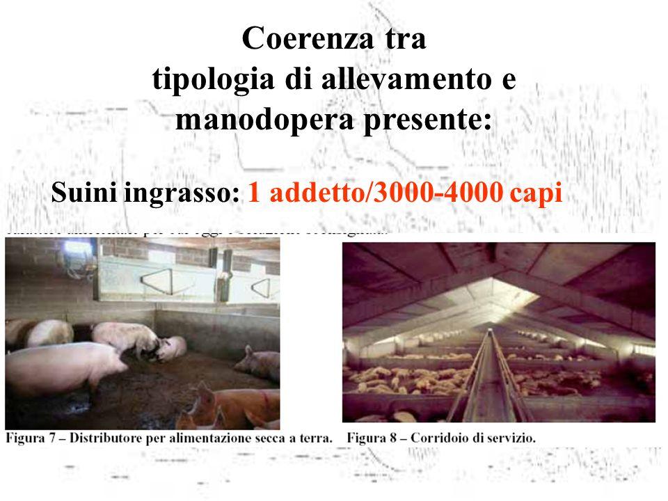 tipologia di allevamento e Suini ingrasso: 1 addetto/3000-4000 capi