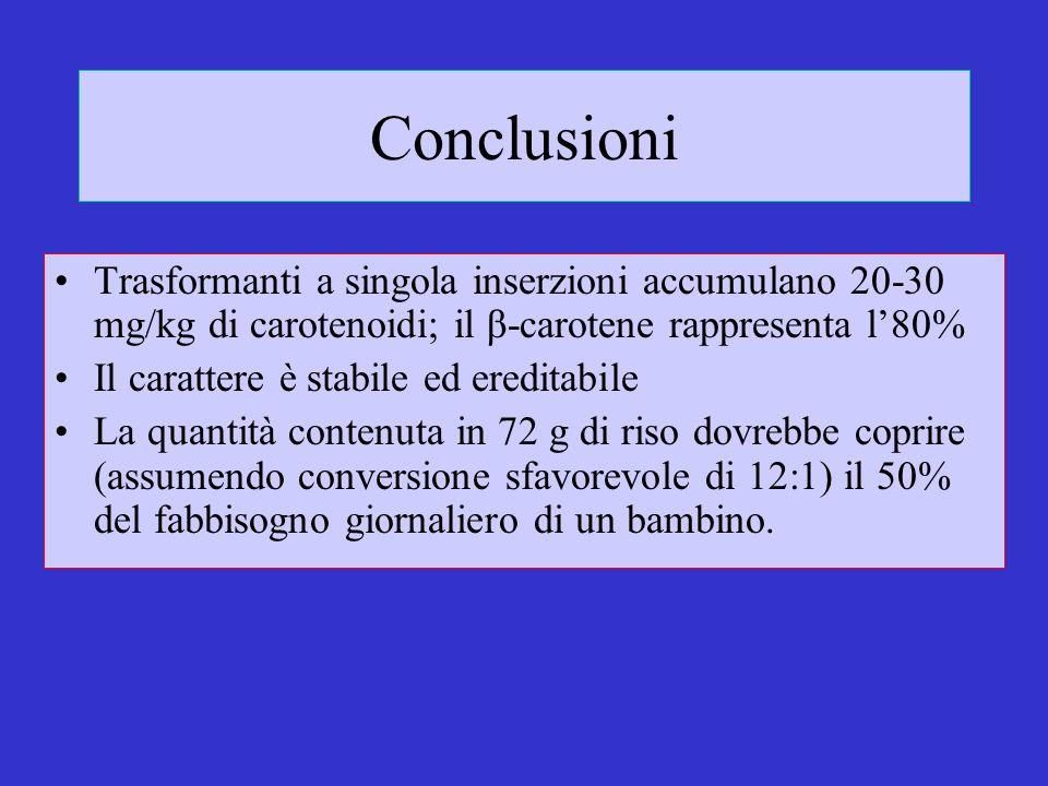 Conclusioni Trasformanti a singola inserzioni accumulano 20-30 mg/kg di carotenoidi; il β-carotene rappresenta l'80%