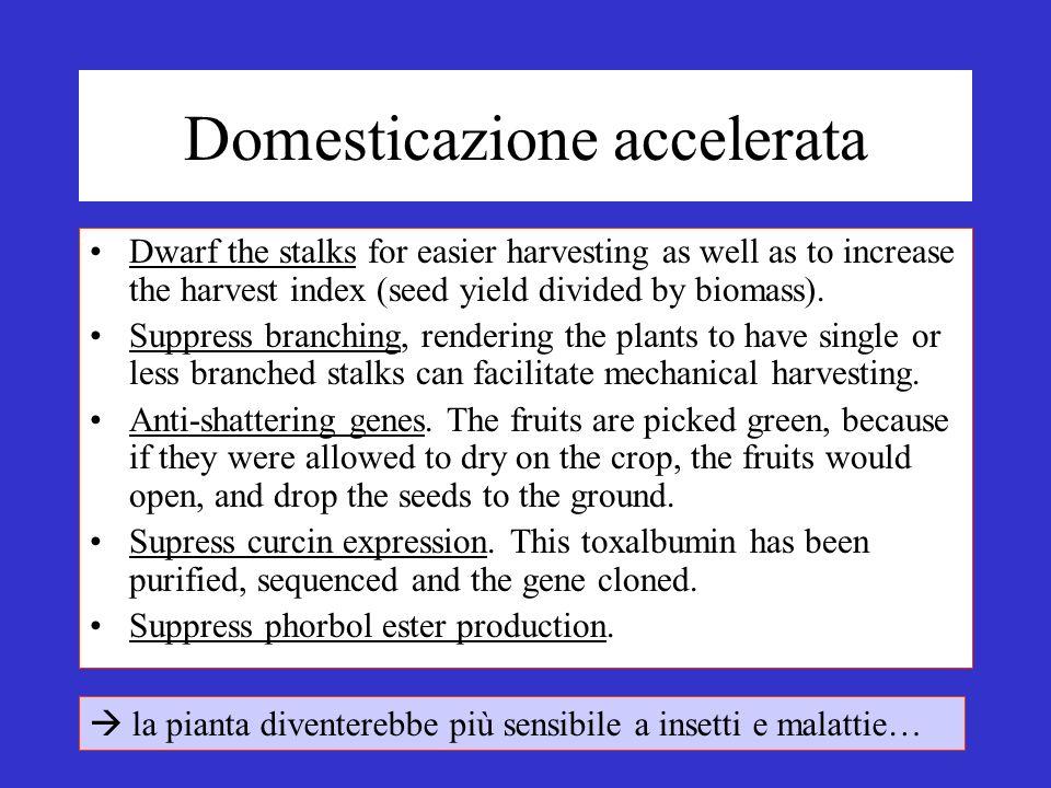 Domesticazione accelerata