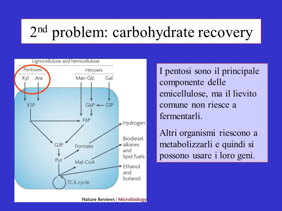 2nd problem: carbohydrate recovery