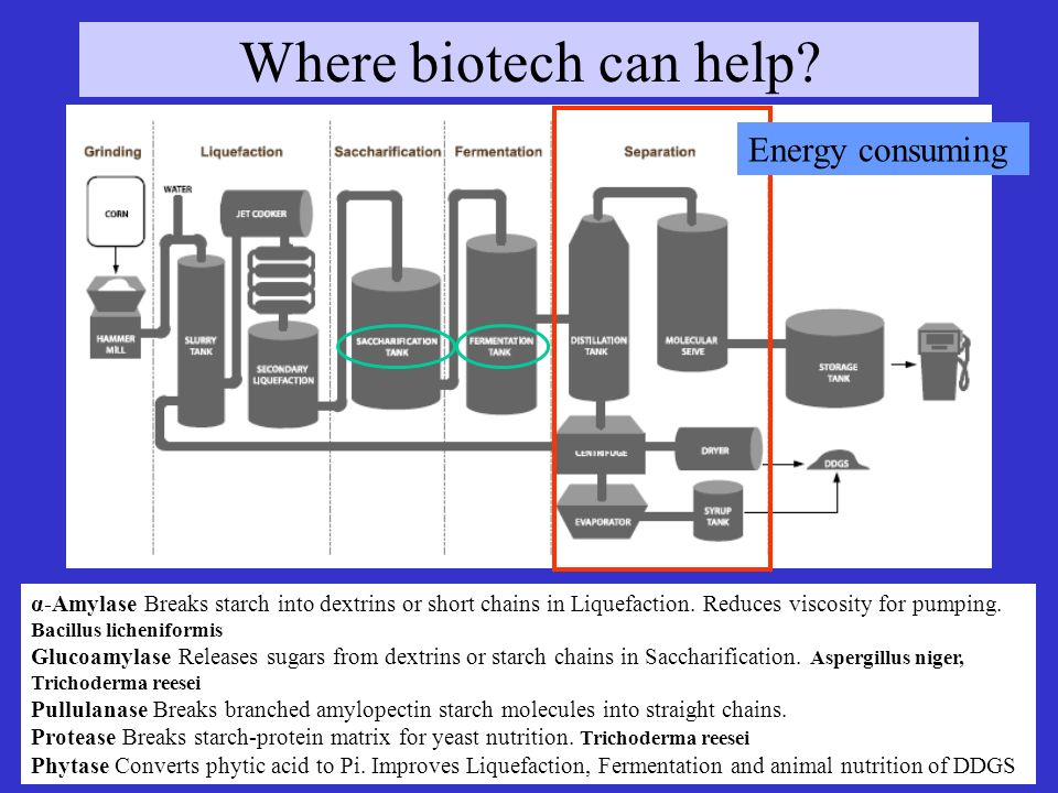 Where biotech can help Energy consuming
