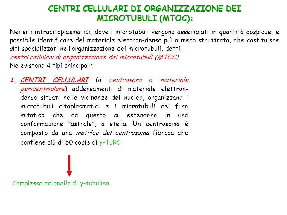 CENTRI CELLULARI DI ORGANIZZAZIONE DEI