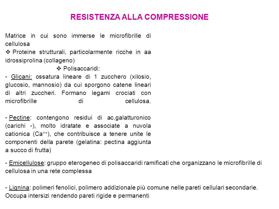 RESISTENZA ALLA COMPRESSIONE