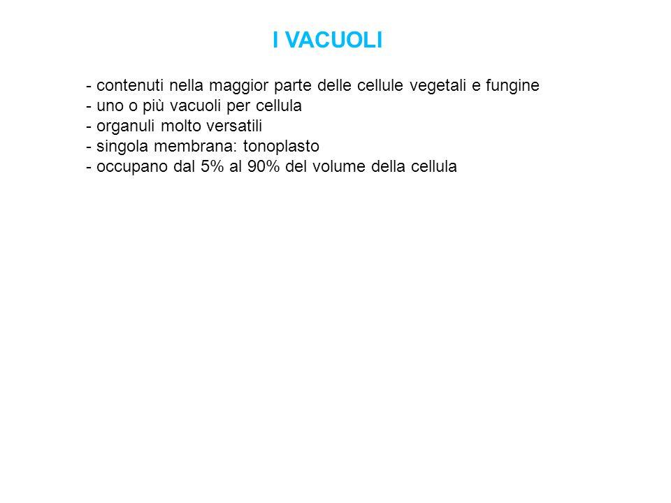 I VACUOLI - contenuti nella maggior parte delle cellule vegetali e fungine - uno o più vacuoli per cellula.