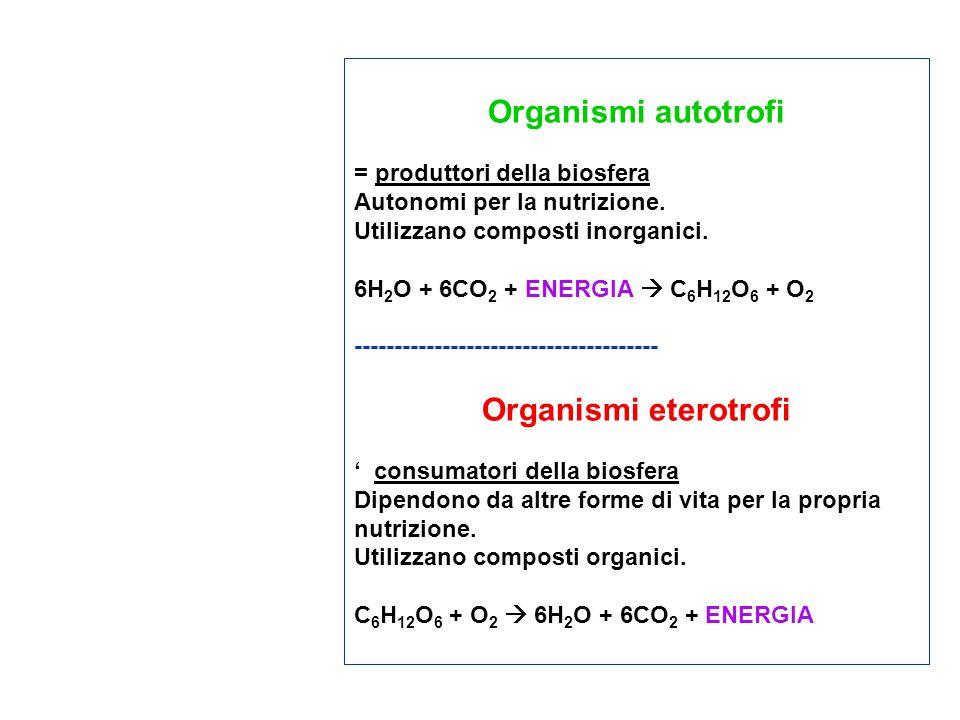 Organismi autotrofi Organismi eterotrofi