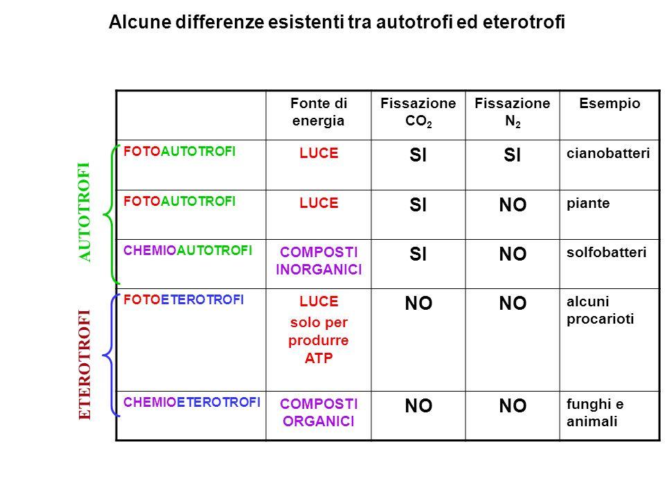 Alcune differenze esistenti tra autotrofi ed eterotrofi