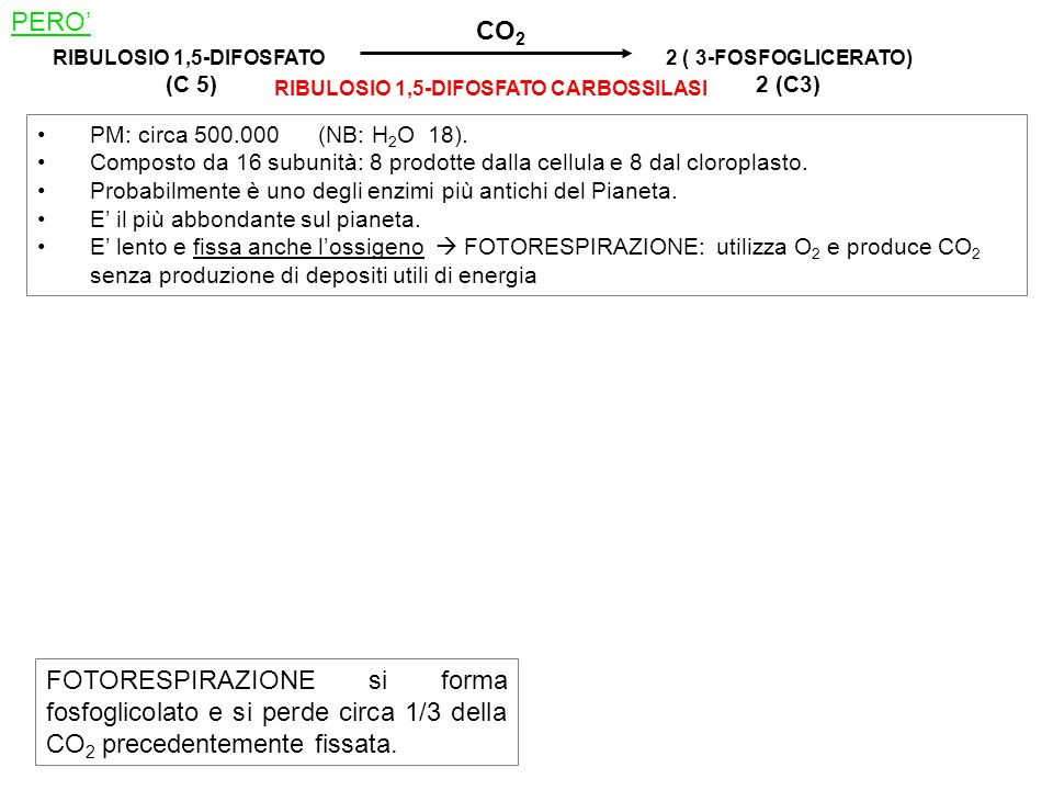PERO' CO2. RIBULOSIO 1,5-DIFOSFATO. (C 5) 2 ( 3-FOSFOGLICERATO) 2 (C3) RIBULOSIO 1,5-DIFOSFATO CARBOSSILASI.
