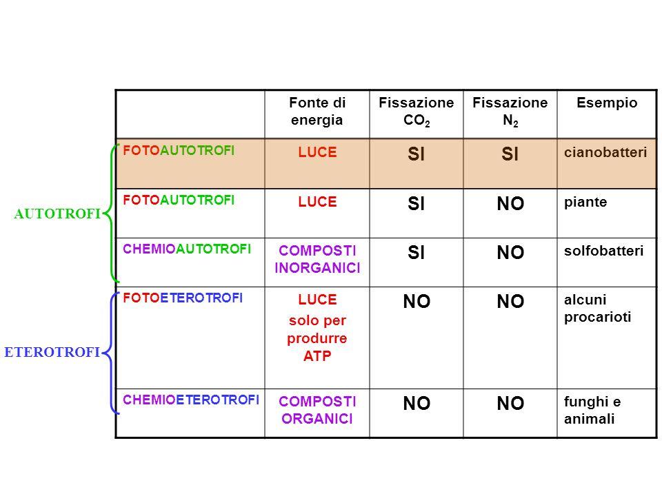 SI NO Fonte di energia Fissazione CO2 Fissazione N2 Esempio LUCE